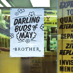Viva Brother - Darling Buds Of May